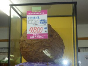 スズメ蜂の巣・・・・4800円プラス消費税 長野南バイパス店